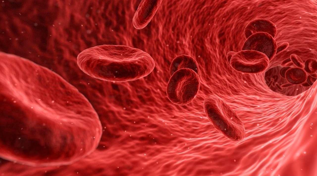 Covid sistema immunitario